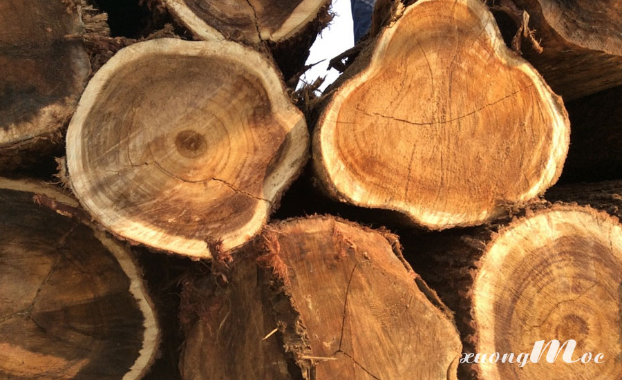 Gỗ tràm tự nhiên được dùng để đóng đò gỗ nội thất tại Xưởng