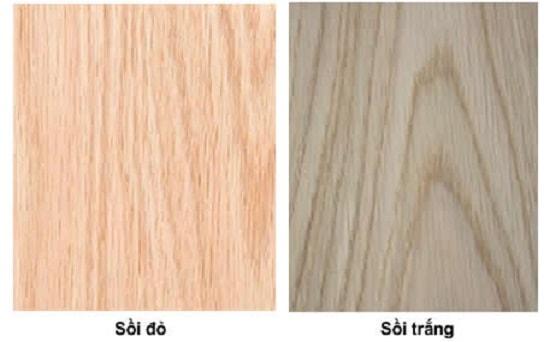 Gỗ sồi còn phân biệt gỗ sồi đỏ và gỗ sồi trắng
